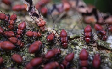 Learn about termite control